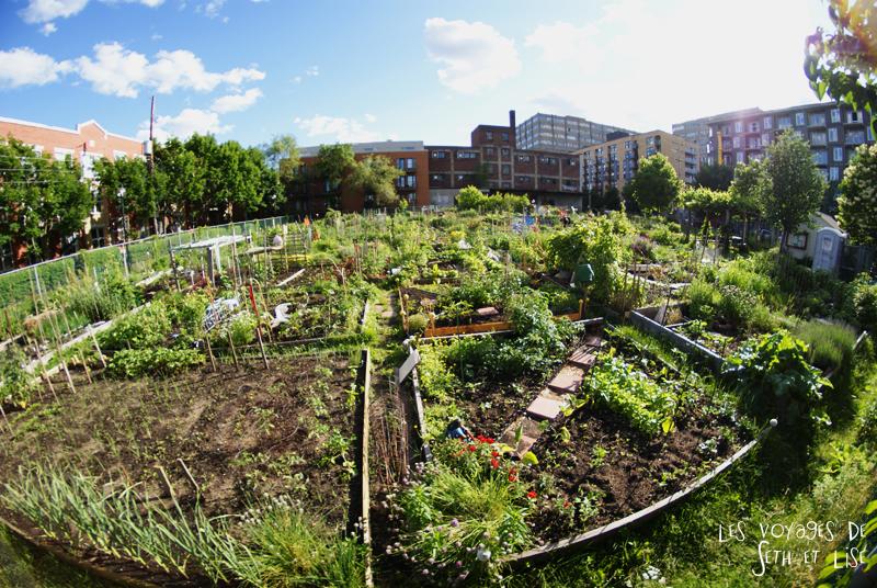 jardin colaboratif mile end