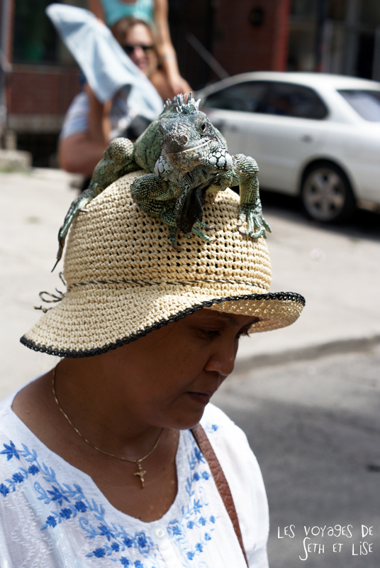 blog pvt canada toronto couple tour du monde portrait iguane chapeau hat lady